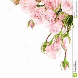 Pink Rose Border Clipart