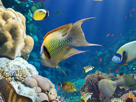 wallpaper hd marine animals underwater world fish corals