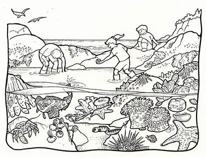 Tide Clipart Pools Pool Creatures Pages Coloring