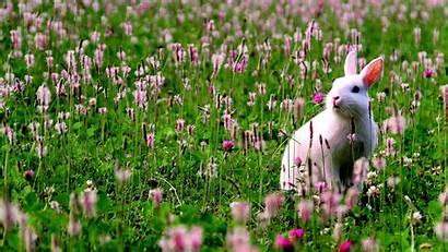 Rabbit Flowers Animals Grass Standing Around Staring