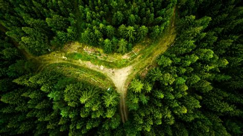 Wallpaper Forest, Aerial view, HD, Nature, #6001
