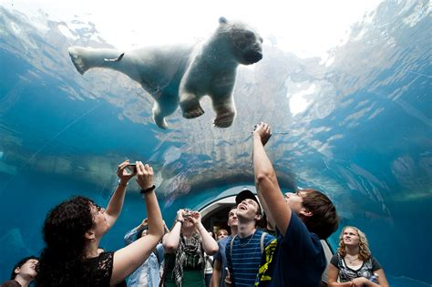 pittsburgh zoo ppg aquarium achieves humane