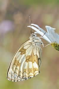 Beautiful Nature Butterflies