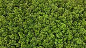 Stock Video Of Top View Of Mangrove Forest 17651602