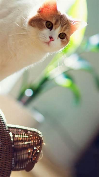 Iphone Cat Phone Wallpapers Backgrounds Pixelstalk