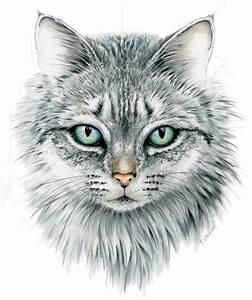 Domestic, Cat, Face