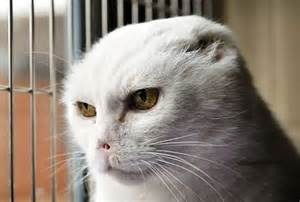 harry potter cat the voldemort cat harry potter photo 19365733 fanpop