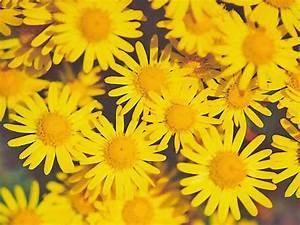 Chrysanthemum Photos - The Flower Expert - Flowers ...