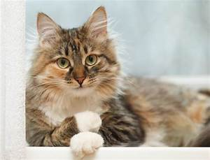 11 Tips For Looking After Long Haired Cats