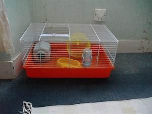Questions avant adoption d'un hamster Forum Hamster Hamster Wamiz