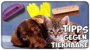 Katzenhaare Entfernen Kleidung : tipps gegen tierhaare hundehaare katzenhaare aus kleidung m bel teppich und auto entfernen ~ Orissabook.com Haus und Dekorationen