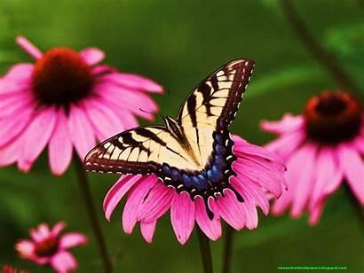 Butterfly Flowers Wallpapers Flower Android Desktop Beauty