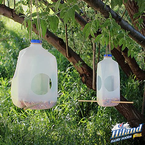 lifehack milk jug bird feeder the hiland home