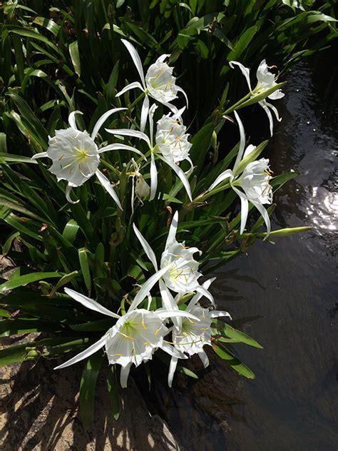 south carolina native plant society