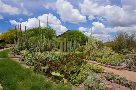 Desert Botanical Garden - asla 2013 professional awards ottosen entry garden