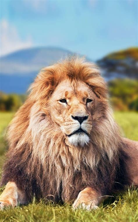 Animal Live Wallpaper - king photos iphone wallpaper 2019 live wallpaper hd