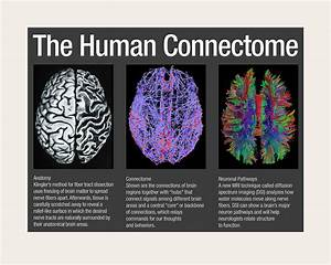 Human Connectome Classification And Recognition Challenge  Cmu Neurohackathon 2016