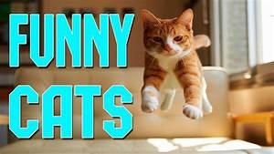 Funny Cats Comp... Funny Cat Videos