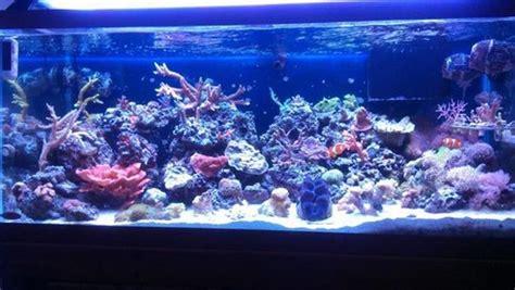 common saltwater aquarium fish diseases ratemyfishtankcom