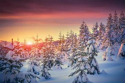 Snow Sunset Winter Christmas Nature Tree Wallpapers