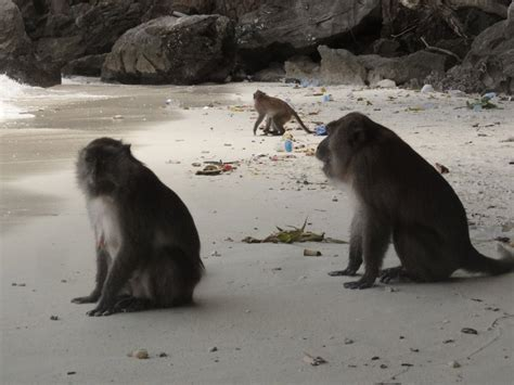 monkeys  monkey beach photo