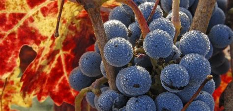Frey Vineyards Organic Wine Exchange