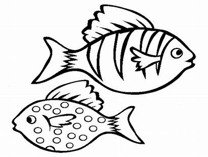 Fish Outline Clipart Coloring Pages Library Clip