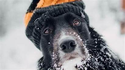 Hat Dog Snow Winter Muzzle Background Blur