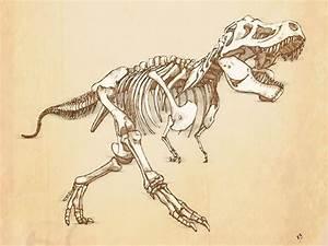 T-Rex drawing skeleton | Archetype | Pinterest | Skeletons ...