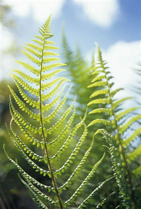 fern spore spores plants plant growing express grown getty relation titchmarsh alan