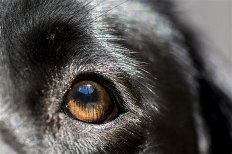 people  conjunctivitis  dogs cuteness