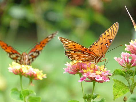 Garten Pflanzen Schmetterlinge by Blumen F 252 R Schmetterlinge Ein Garten F R Schmetterlinge
