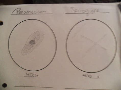 Draw And Label Paramecium