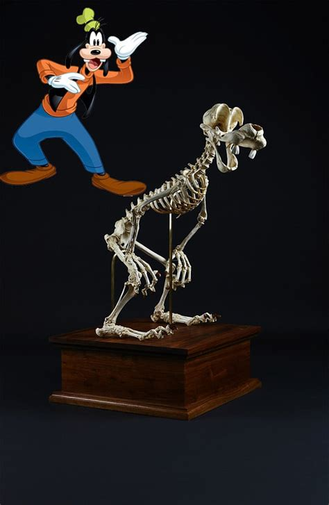 artist creates skeletons  cartoon characters