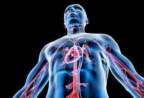 vasi arteriosi ecodoppler studio medico san francesco a pinerolo