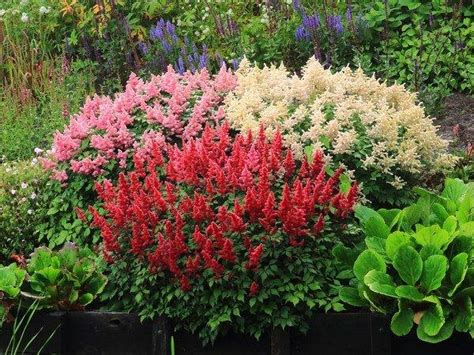 plants suitable for shade shade garden design ideas how to choose the right plants