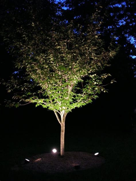 tree uplighting ideas landscape trees