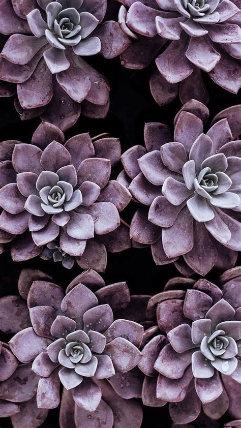 Beautify your iphone with a wallpaper from unsplash. Succulent Phone Wallpapers - Top Free Succulent Phone Backgrounds - WallpaperAccess