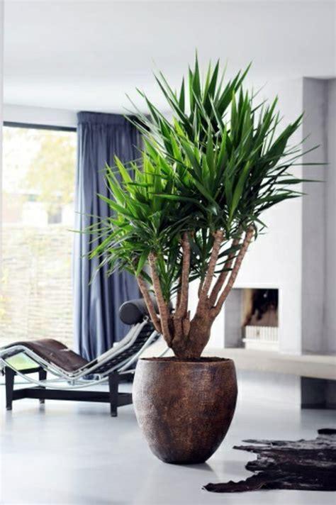 palmlilie eine bezaubernde zier und nutzpflanze