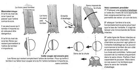 comment couper  arbre idees decoration idees decoration