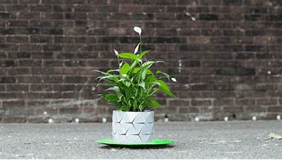 Roots Pot Grows Plants Plant Origami Along
