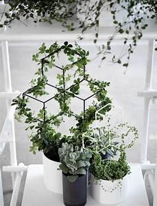 Plante Intérieur Grimpante : tuteur pov medium pour plantes grimpantes h 42 cm menu jardin klimplanten tuin et ~ Louise-bijoux.com Idées de Décoration