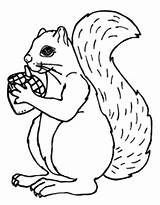 Coloring Pages Acorn Squirrel Squirrels Drawing Printable Fall Cute Secret Animal Autumn Print Sheets Pattern Zoo Getcoloringpages Getdrawings Popular Coloringtop sketch template