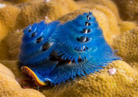 these dangerous sea creatures actually exist