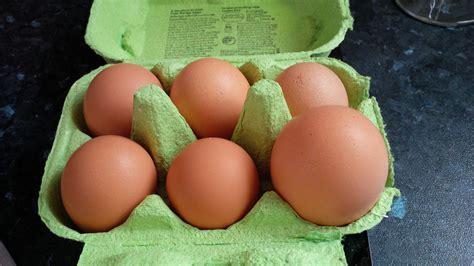 Vergleichen Sie Ihre Eglu-eier Mit Eiern Aus Dem Quantité Eau Douche Italienne Modele Avec Siege Gel Musc Rectangulaire Pour Chien Support Rideau Bain Douch