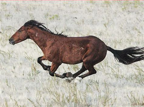 prey horses animals deer eat horse they meat know mustang veggies bunnies instinctually means afraid predators colors