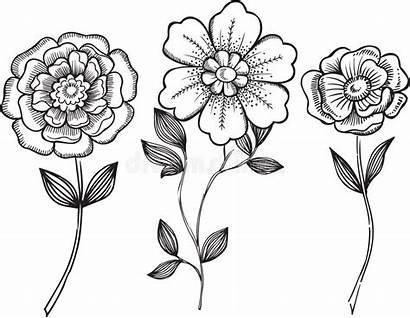 Ornamental Vector Flowers Illustration