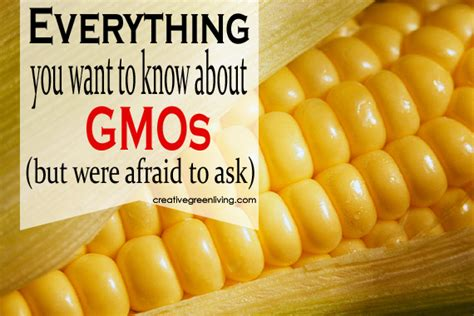 Everything You Want To Know About Gmos But Were Afraid To