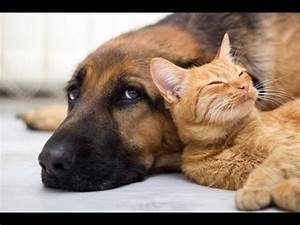 Wonderful Cats and dogs loving each other - YouTube