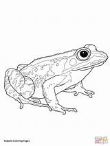 Coloring Tadpole Pages Frogs Woodfrog Frog Printable Supercoloring Drawing Preschool Tree Getdrawings Animals Giving Categories sketch template